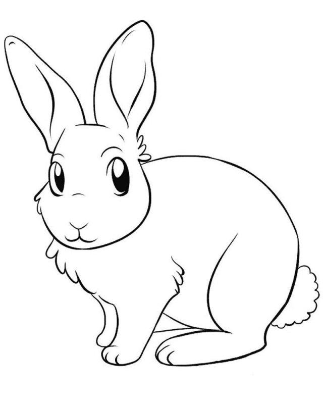 Рисунок заяц раскраска