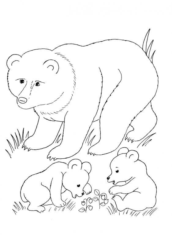 Расскраски медведей